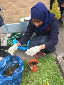 TY Student planting